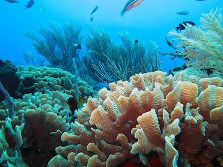 Coral reef 13