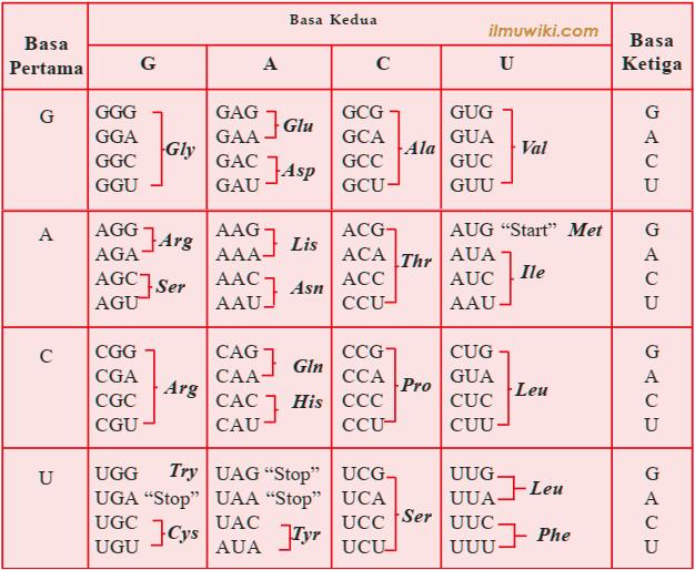 Tabel kode genetik dan keterangannya