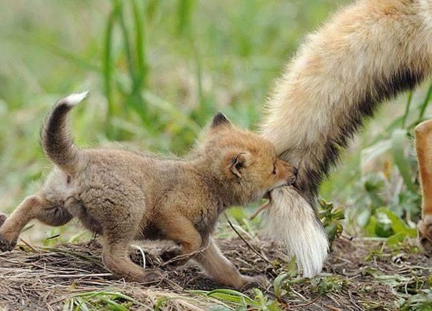 lindos%2Banimais%2Bbebe%2B%2B%252826%2529 - Os filhotes de animais mais lindinhos que você já viu!