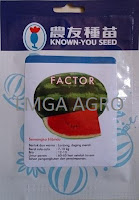 benih semangka f1 factor,benih semangka berbiji,semangka f1 factor,known you seed,lmga agro