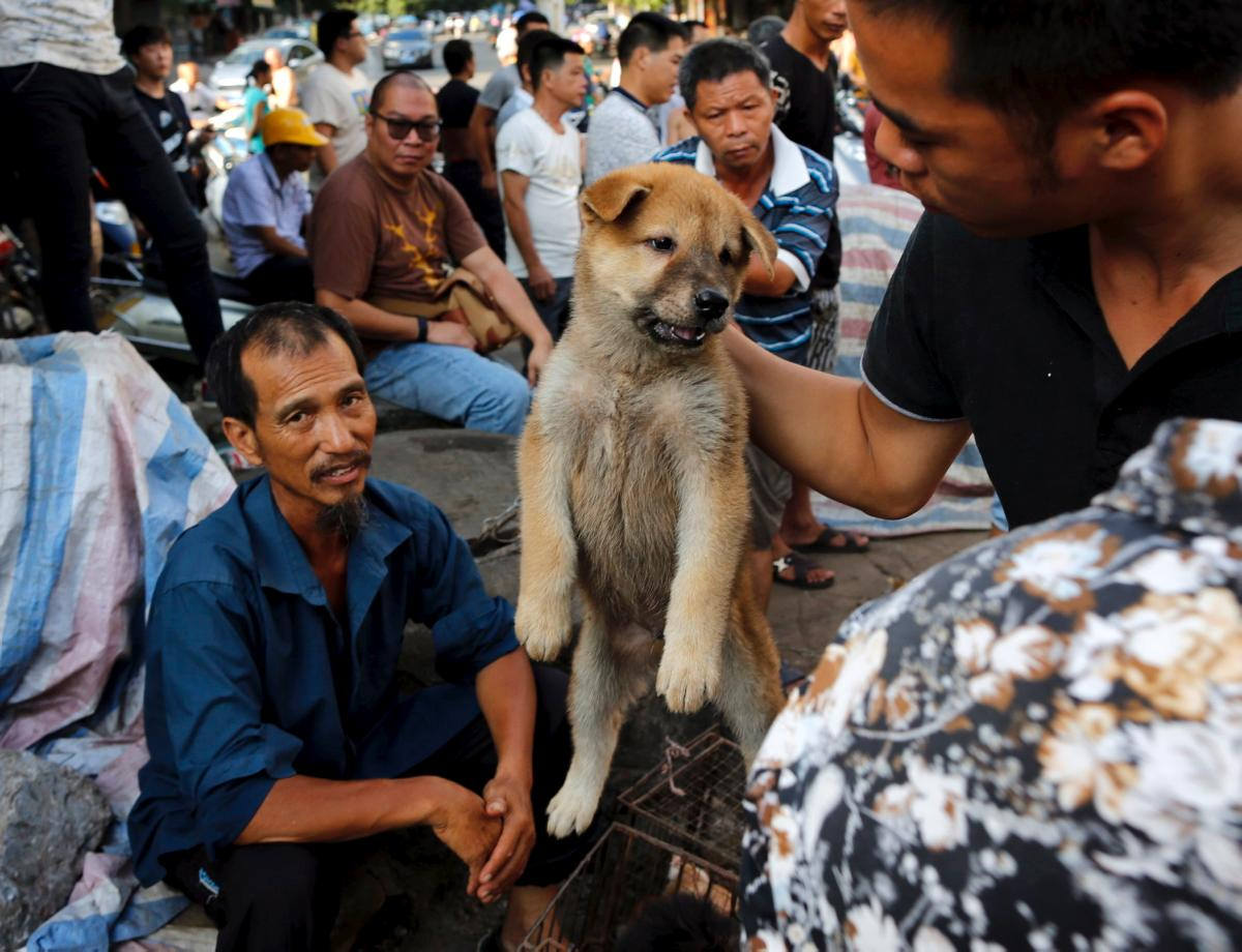 Yulin Dog Festival Video Liveleak