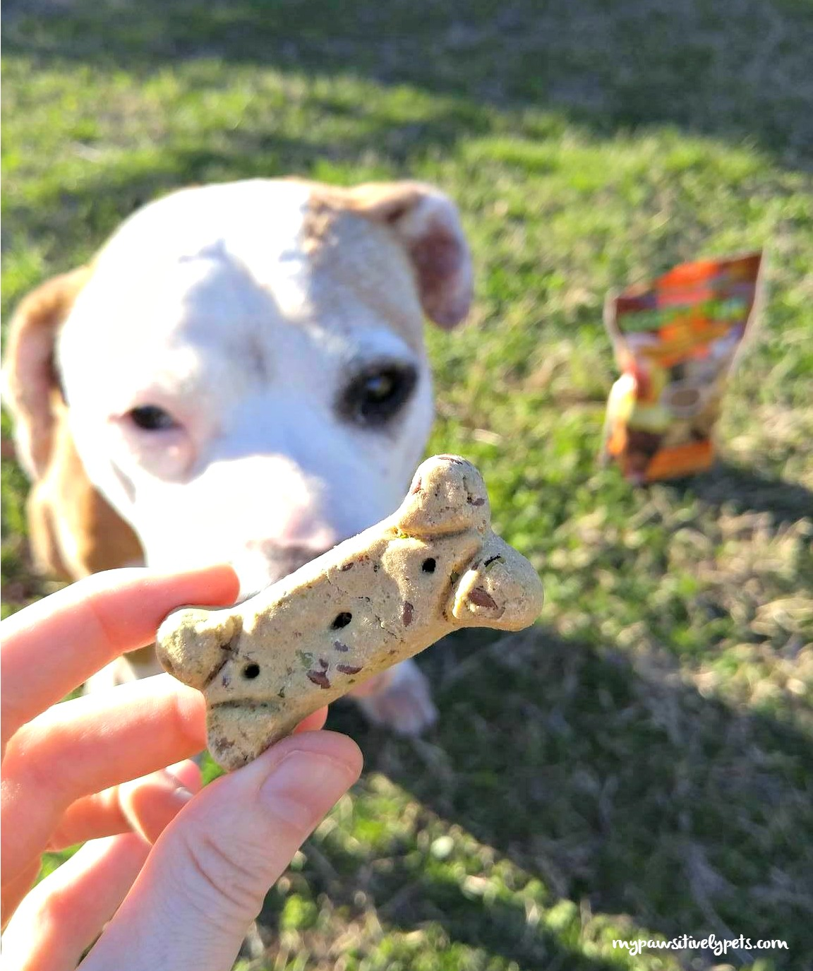 Noah S Bark All Natural Dog Treats