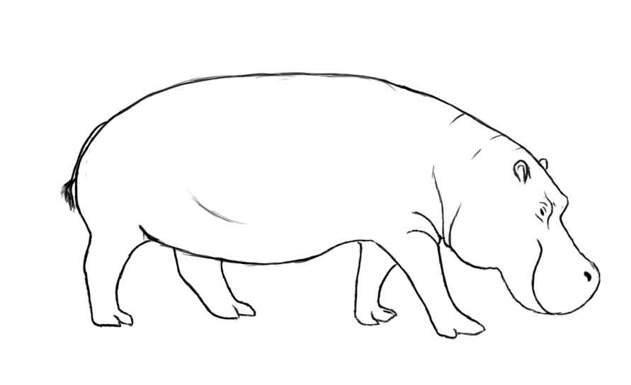 How To Draw A Hippopotamus - Draw Central  How To Draw A H...