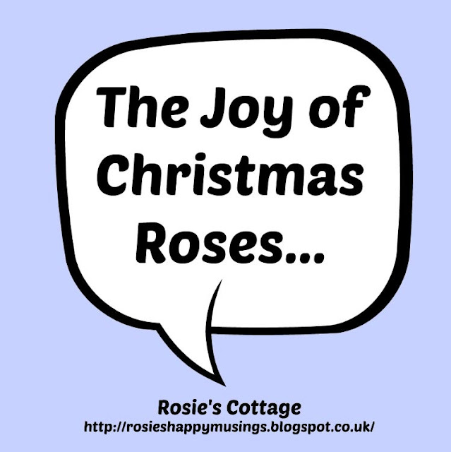 The Joy Of Christmas Roses