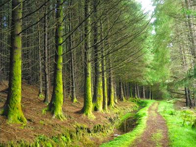 Loch Lomond, Cruach Tairbeirt, Escocia, Scotland, Regne Unit, United Kingdom