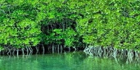wisata magrove di Kepulauan Meranti Riau