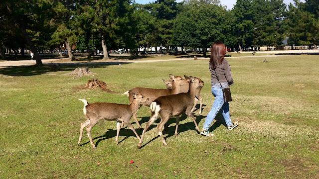 Travel: Nara, Japan