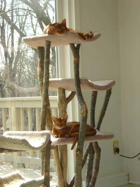 Cat Tree 3