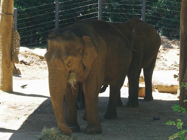 メルボルン動物園(Melbourne Zoo)