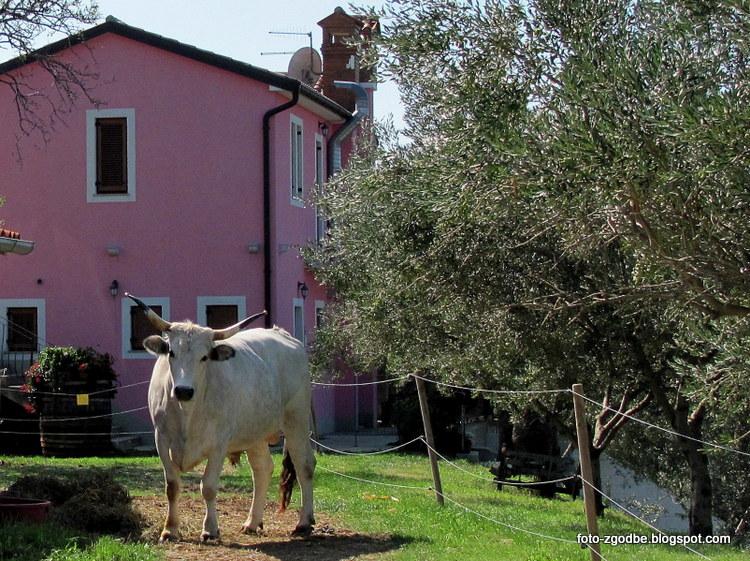 Slovenija, živali