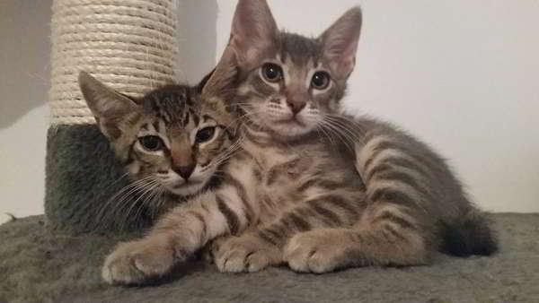 gatitos abandonados