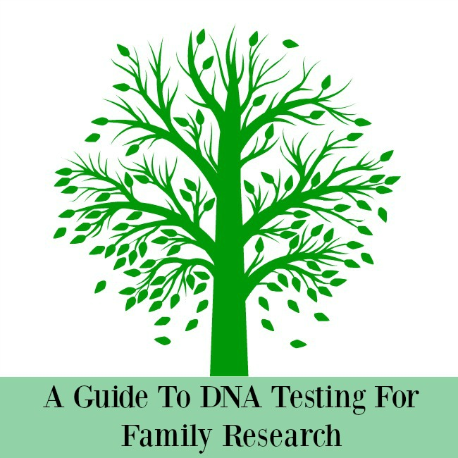 a-guide-to-DNA-testing-for-family-research-text-on-illustration-of-a-tree