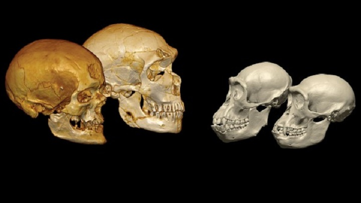 Human Evolution: DNA from Neanderthal relative may shake up human family tree