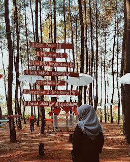 Salah Satu Spot unik Hutan Pinus Wajak