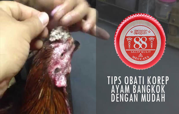 Obat Kurap atau Korep Ayam Tradisional paling Manjur