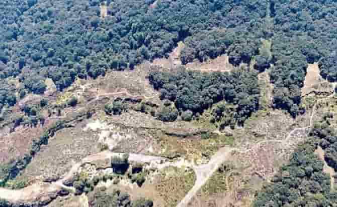 Árboles, ecología, medio ambiente