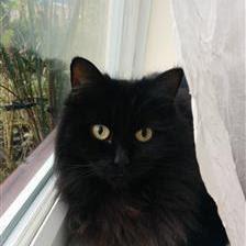 adopt Kizzy