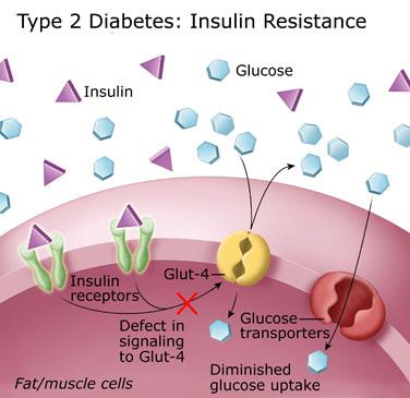 biochemistry class notes test for insulin resistance rh edusanjalbiochemist blogspot com