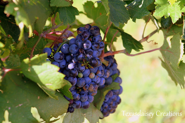 Texas Generations Vineyard in Seymour, Texas