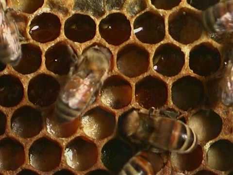 Πωλείται μέλι άνθεων και μέλι πεύκου στην Καλαμάτα