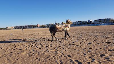 Cavallo sulla spiaggia