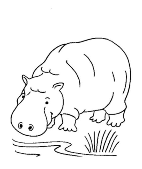 55 Koleksi Gambar Kartun Binatang Berkaki Empat Gratis
