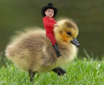 baby-Over-The-baby-Ducks-Hd-images