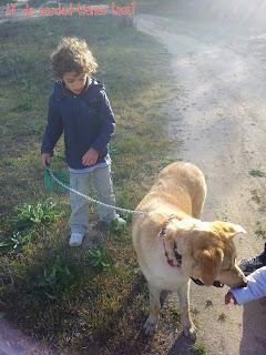 Asistencia-terapia-discapacidad-blog-etología-Etolia