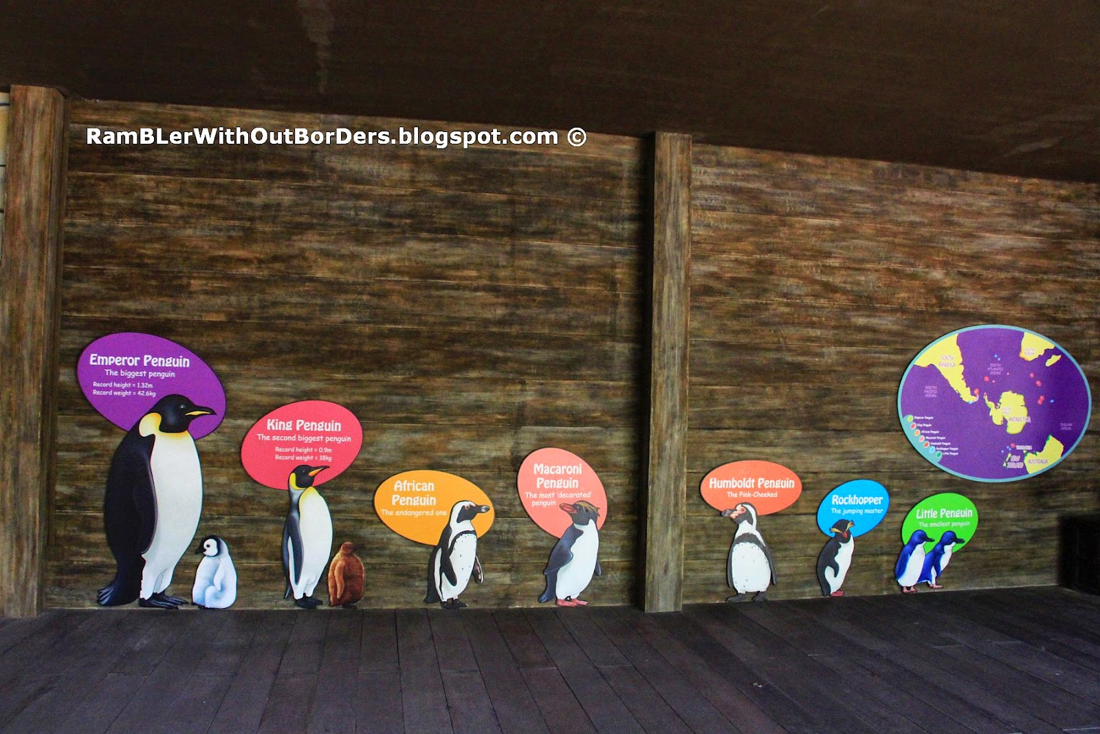 Penguin Coast ExhibitHumbodt Penguins, Jurong Bird Park, Singapore
