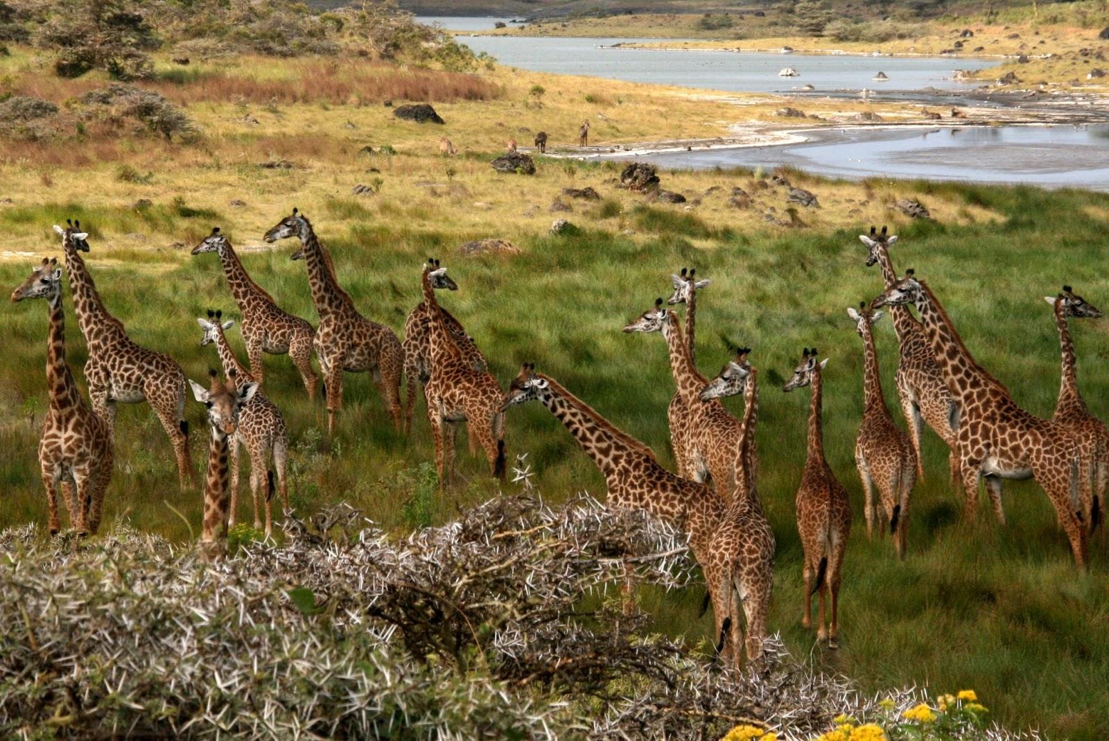 Kết quả hình ảnh cho Republic of Zambia tourist attraction