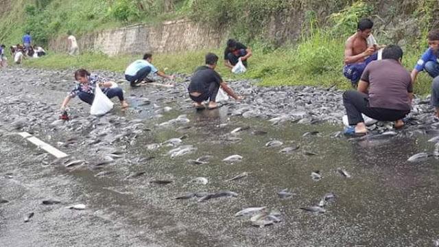 Truk Angkutan Ikan Tabrak 3 Mahasiswa, Warga Ramai Rebutan Lele di Jalanan