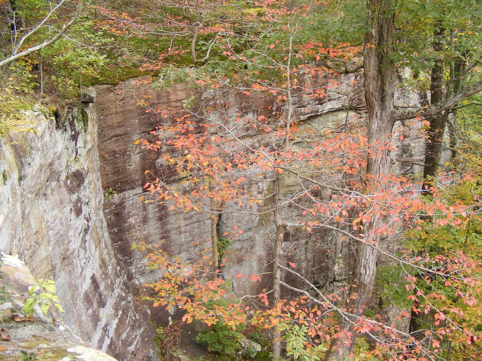 bell smith springs is one of eight wilderness areas in shawnee national forest located in far southern illinois it is essentially a midwestern canyon - Shawnee National Forest Garden Of The Gods