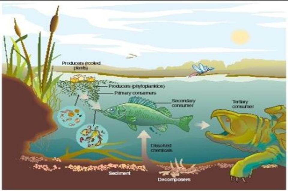 Mari Membaca Konsep Dasar Ekosistem Dan Jenis Jenis Ekosistem