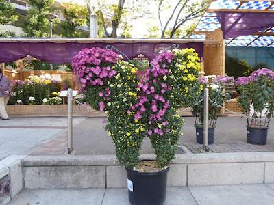 ひらかた菊花展 (岡東中央公園) 菊の花の蝶々