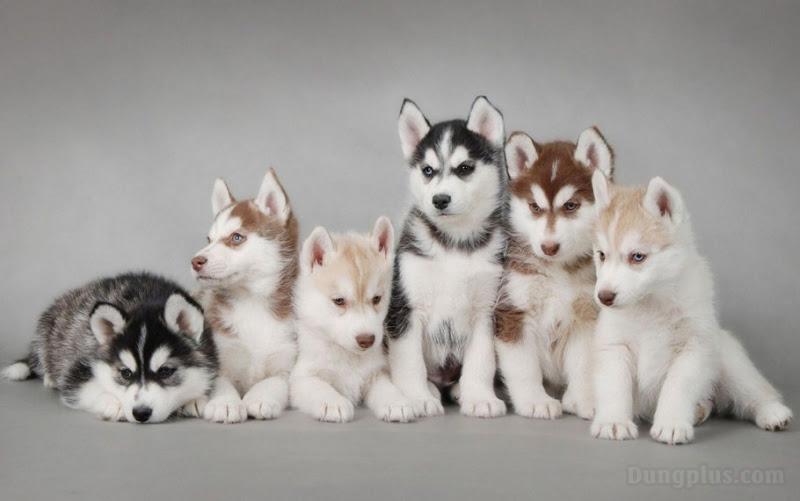 hình ảnh chó con dễ thương nhất 7