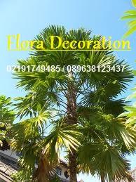 harga jual palm sadeng murah