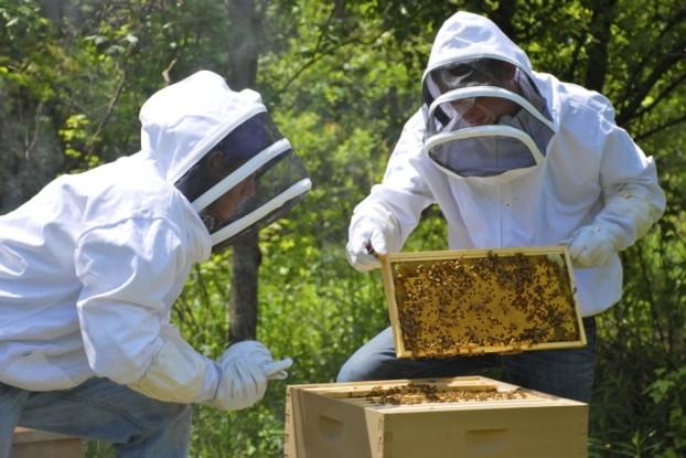 Μέχρι την Δευτέρα 21 Ιανουαρίου οι Δηλώσεις Διαχείμασης για τους μελισσοκόμους της Αργολίδας