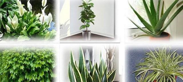 Αυτά τα φυτά είναι βόμβες οξυγόνου