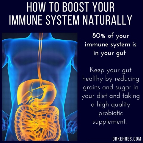Immune System And Gastrointestinal >> How Does The Immune System Know Friend From Foe In Gut Bacteria
