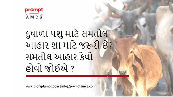 Balanced Diet Feed for Milking Animal  / દુધાળા પશુ માટે સમતોલ આહાર /दुधारू पशुओ के लिए संतुलित आहार