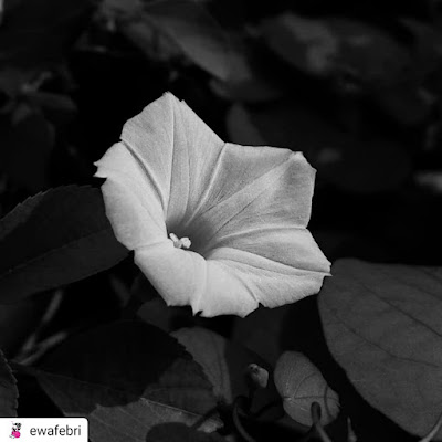 black and white photography flower