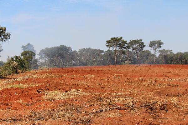 Image result for desmatamento oeste da bahia