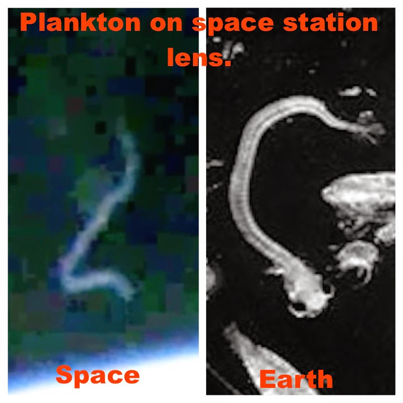 UFO SIGHTINGS DAILY: Plankton Found Living On The Space ...