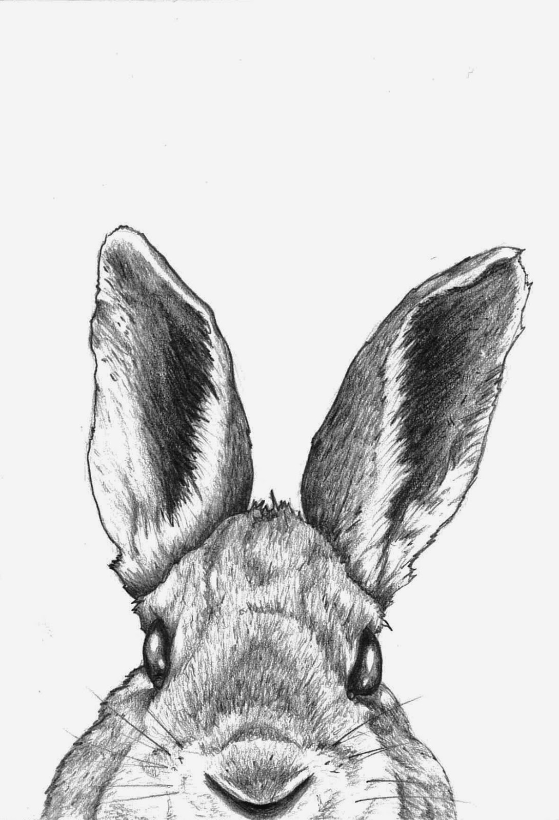 inkspired musings: B is for Bunny