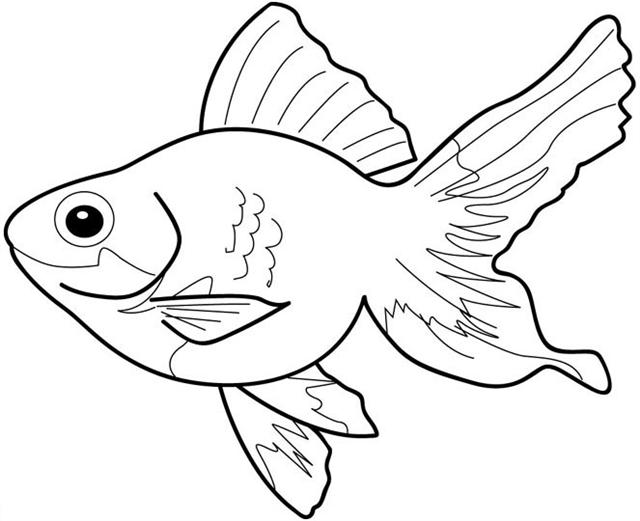 Fish Coloring Pages | Team colors