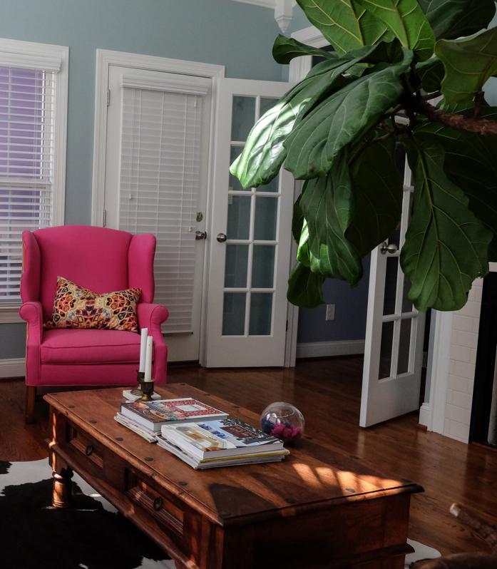 Fiddle Leaf fig photobombs-designaddictmom