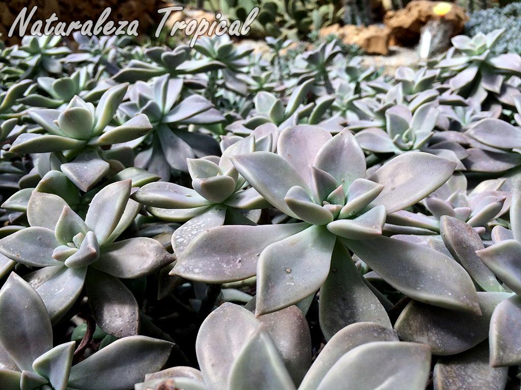Naturaleza tropical manual para cultivar plantas for Especies ornamentales