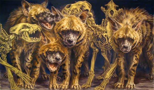 Resultado de imagem para hienas comendo estrume