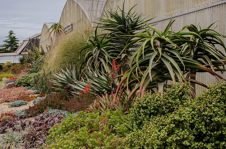 The Succulent Gardens Nursery