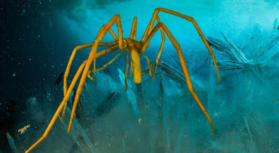 sea spiders underwater spiders